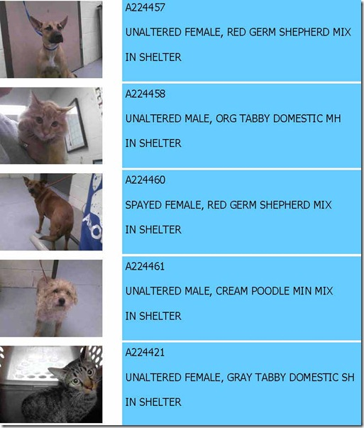 11/12/13 MONTGOMERY COUNTY ANIMAL SHELTER REPORT