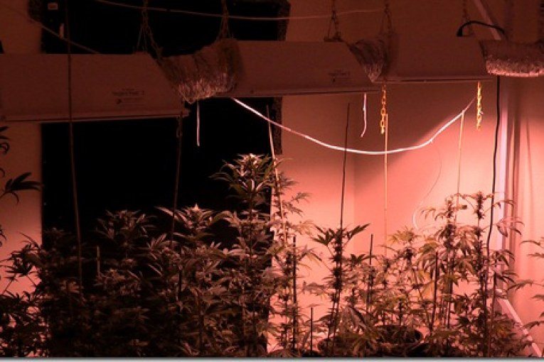 HYDRO-MARIJUANA GROW HOUSES FOUND IN THE WOODLANDS
