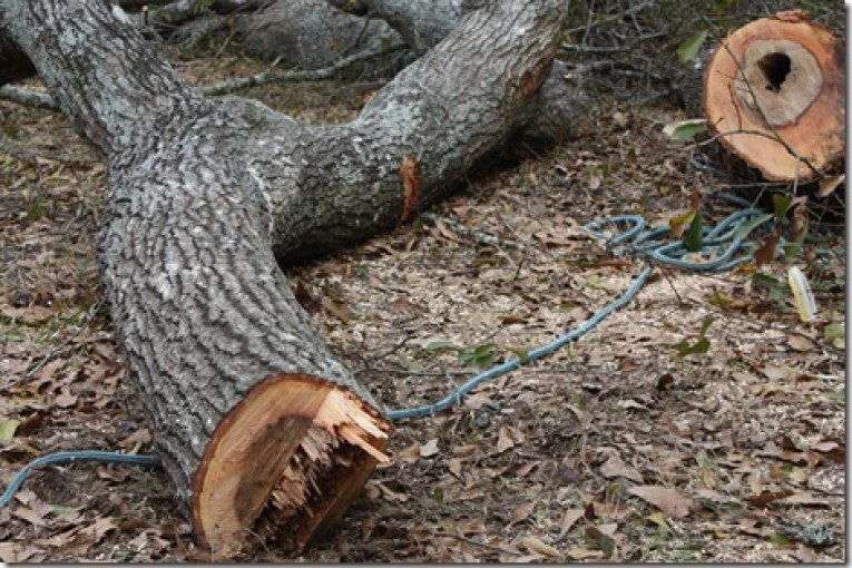 CONROE MAN DIES IN TREE CUTTING ACCIDENT