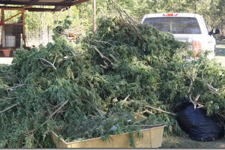 LARGEST MARIJUANA SEIZURE IN LIBERTY COUNTY HISTORY