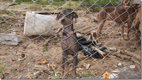starving dogs found