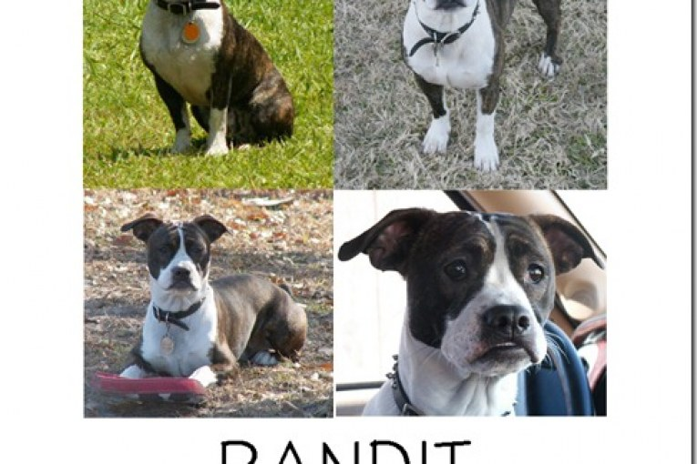 MISSING BANDIT