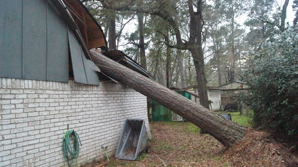 House Hit By Tree Second Time In In 20 Years
