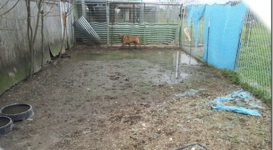 OVER 150 ABUSED ANIMALS SEIZED