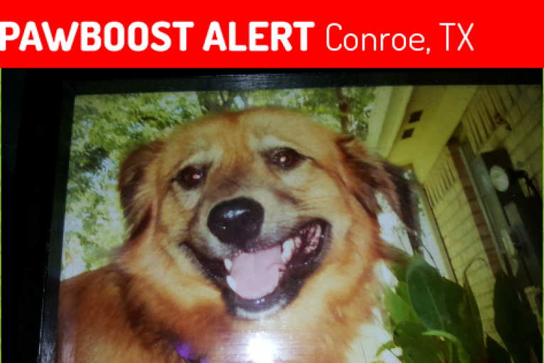 MISSING DOG IN CONROE