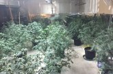 INDOOR MARIJUANA GROW BUSTED
