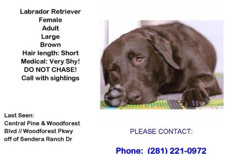 MISSING IN THE WOODFOREST PARKWAY AREA