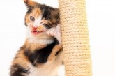 Fix a Feline for Free Day  this Sunday,.January 21, 2018 at our Spring location for qualified individuals.