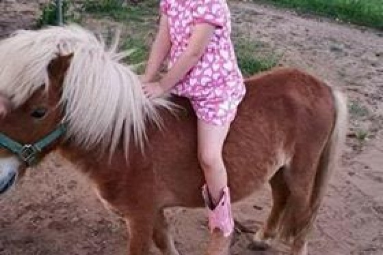 LOST PONY IN SPLENDORA