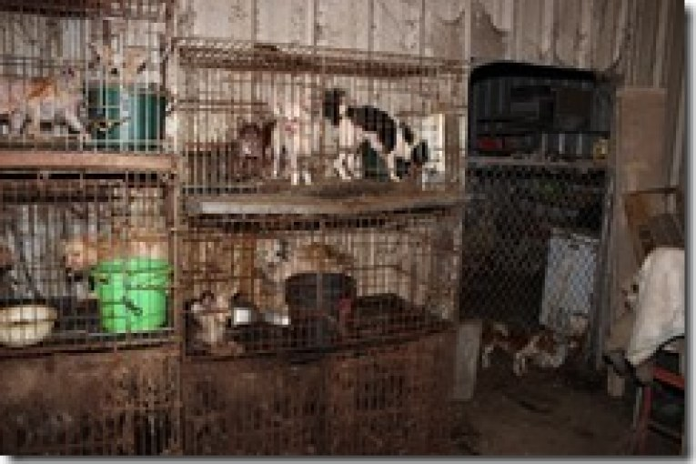OFFICIAL PRESS RELEASE – CRUELTY TO ANIMAL CASE – 300 ANIMALS