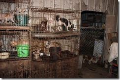 OFFICIAL PRESS RELEASE - CRUELTY TO ANIMAL CASE - 300 ANIMALS