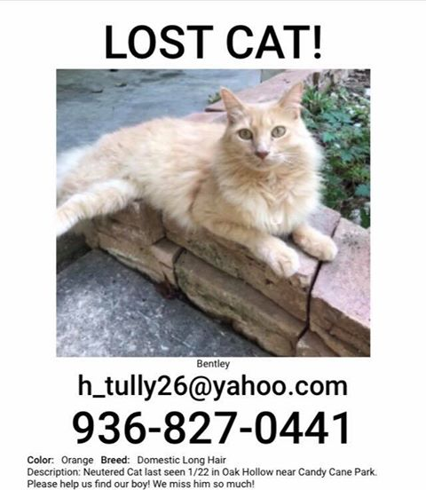 MISSING CAT-CONROE