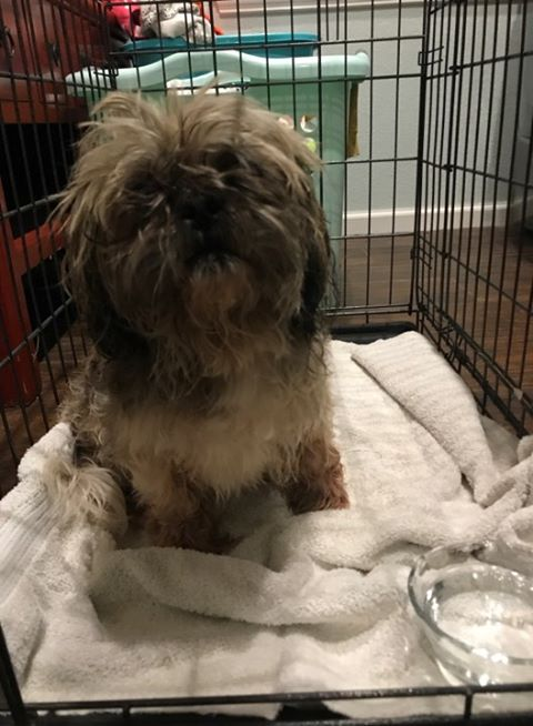 DOG FOUND DURING LAST NIGHTS STORM IN HIGHLAND HOLLOW AREA