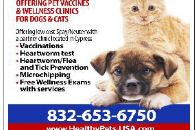 DISCOUNT VET SERVICES IN CONROE TODAY