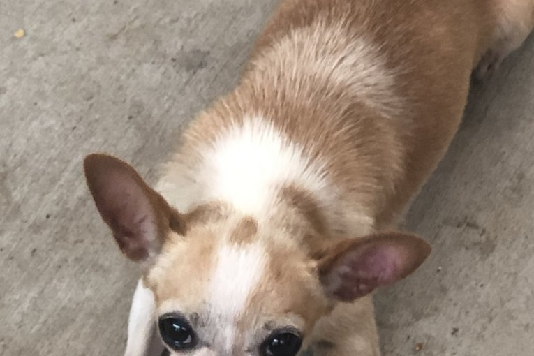 HELP FIND MISSING DOG IN NEW CANEY