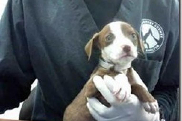MONTGOMERY COUTNY ANIMAL SHELTER REPORT FOR 2/28/17