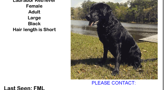 MISSING LAB IN CONROE