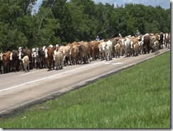 053115 LIBERTY CATTLE RESCUE AND DRIVE.Still042