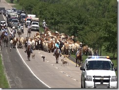 053115 LIBERTY CATTLE RESCUE AND DRIVE.Still045