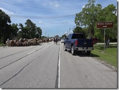 053115 LIBERTY CATTLE RESCUE AND DRIVE.Still054
