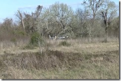 022816 NAVASOTA PLANE CRASH.00_00_43_18.Still003