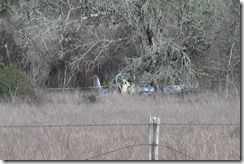 022816 NAVASOTA PLANE CRASH.00_01_51_04.Still006