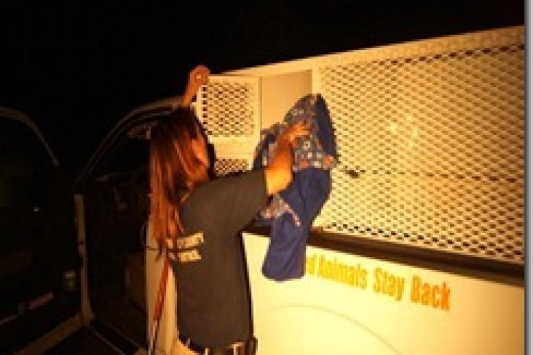 LATE NIGHT RESCUE FOR MONTGOMERY COUNTY ANIMAL CONTROL