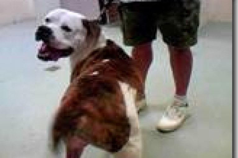 MONTGOMERY COUNTY ANIMAL SHELTER REPORT FOR 8/10/15