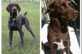 SEARCH AND RESCUE DOGS MISSING