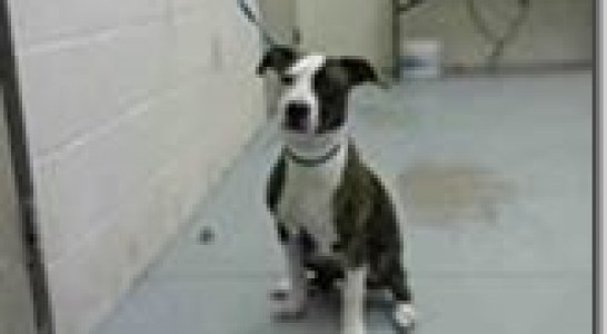 MONTGOMERY COUNTY ANIMAL SHELTER REPORT FOR 12/31/16