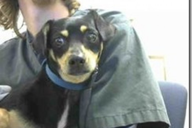 MONTGOMERY COUNTY ANIMAL SHELTER REPORT FOR 3/7/17