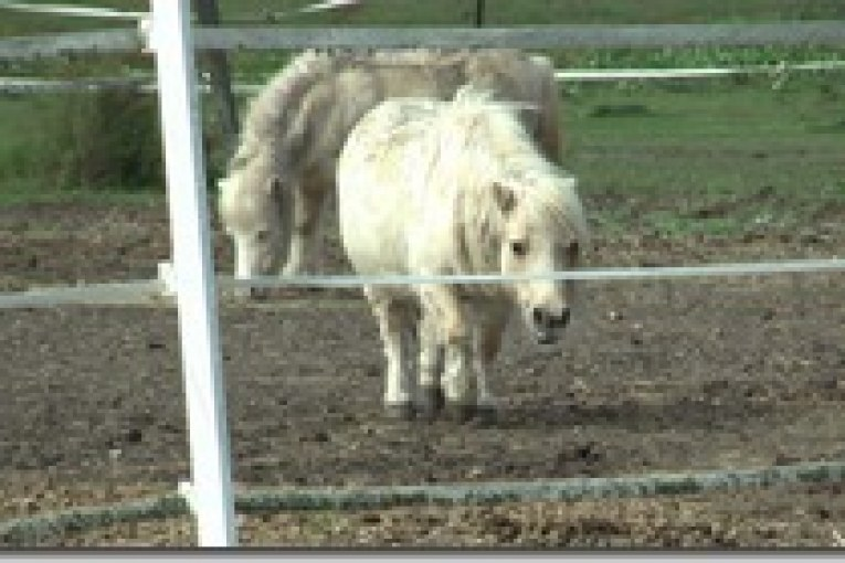 SPIRIT ACRES A HORSE SANCTUARY IN NEED