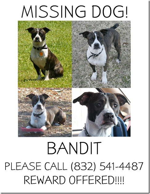 MISSING BANDIT