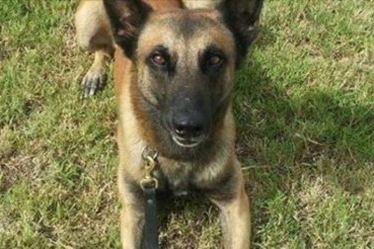 HPD K9 officer put down after being injured during chase in NE Houston