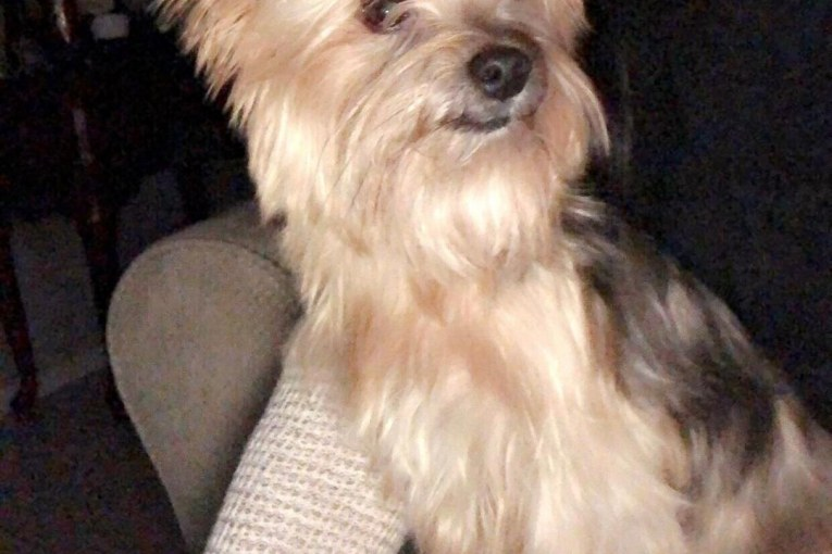 DOG STOLEN IN WILLIS