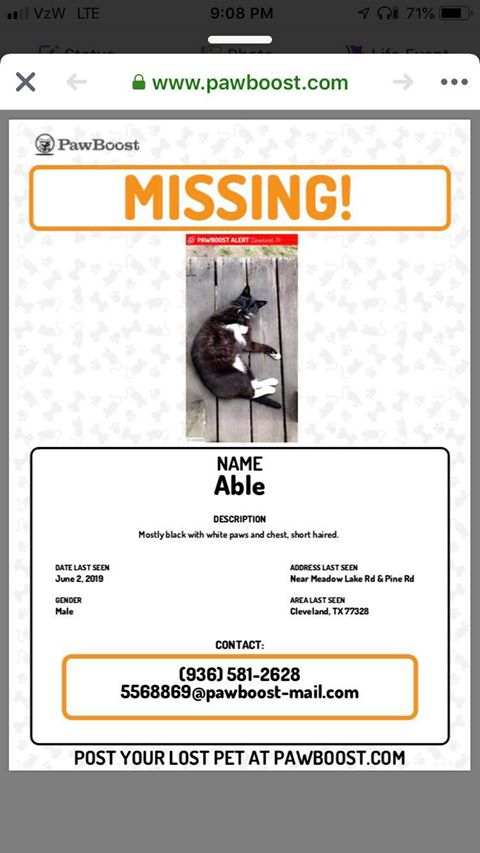 LOST CAT IN CLEVELAND AREA
