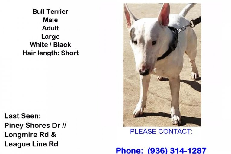 LOST DOG PINEY SHORES