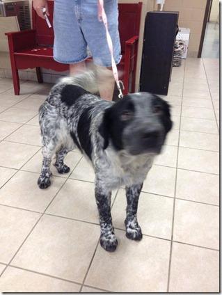 DOG FOUND IN PORTER AREA