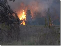 101915 WALKER CO WILD FIRE.Still013