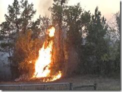 101915 WALKER CO WILD FIRE.Still017