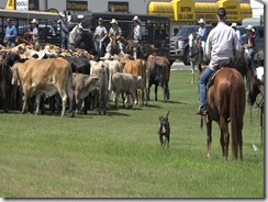 053115 LIBERTY CATTLE RESCUE AND DRIVE.Still052