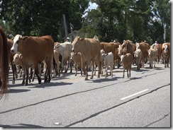053115 LIBERTY CATTLE RESCUE AND DRIVE.Still055